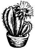 Funny cactus Stock Images