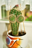 Funny cactus Stock Photo