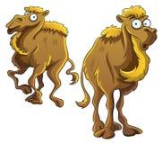 Funny Camel. Cartoon illustration of funny camel Royalty Free Stock Photography