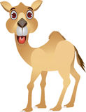 Funny camel cartoon Royalty Free Stock Photos