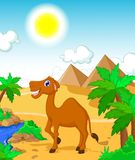 Funny camel cartoon with desert landscape background Stock Photos