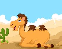 Funny camel cartoon with desert landscape background Royalty Free Stock Photos