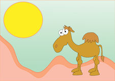 Funny camel in the desert Stock Image