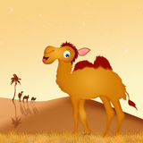 Funny camel in the desert Royalty Free Stock Photo