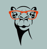 Funny camel wearing glasses. Vector illustration for T shirt, poster, print design Stock Photography