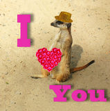 Funny card with words of love. Stock Photos