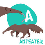 Funny cartoon animals vector alphabet letter set. For kids  A is anteater. Vector illustration Royalty Free Stock Photos