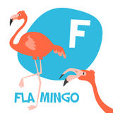 Funny cartoon animals vector alphabet letter set. Funny cartoon animals vector alphabet letter for kids from A to Z. F is flamingo. Vector illustration Stock Photography