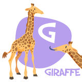 Funny cartoon animals vector alphabet letter set. Funny cartoon animals vector alphabet letter for kids from A to Z. G is Giraffe. Vector illustration Royalty Free Stock Image
