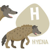 Funny cartoon animals vector alphabet letter set. Funny cartoon animals vector alphabet letter for kids from A to Z. H is Hyena. Vector illustration Stock Photos