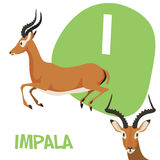 Funny cartoon animals vector alphabet letter set. Funny cartoon animals vector alphabet letter for kids from A to Z. I is Impala. Vector illustration Royalty Free Stock Photography