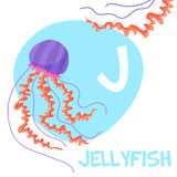 Funny cartoon animals vector alphabet letter set. Funny cartoon animals vector alphabet letter for kids from A to Z. J is Jellyfish . Vector illustration Stock Photo