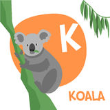 Funny cartoon animals vector alphabet letter set. Funny cartoon animals vector alphabet letter for kids from A to Z. K is Koala. Vector illustration Royalty Free Stock Photography