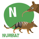 Funny cartoon animals vector alphabet letter set. Funny cartoon animals vector alphabet letter for kids from A to Z. N is Numbat. Vector illustration Stock Images