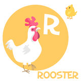 Funny cartoon animals vector alphabet letter set. Funny cartoon animals vector alphabet letter for kids from A to Z. R is rooster. Vector illustration Stock Photography