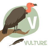 Funny cartoon animals vector alphabet letter set. Funny cartoon animals vector alphabet letter for kids from A to Z. V is Vulture. Vector illustration Stock Images