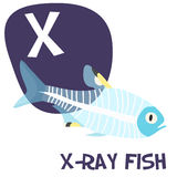 Funny cartoon animals vector alphabet letter set Royalty Free Stock Photos