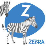 Funny cartoon animals vector alphabet letter set. Funny cartoon animals vector alphabet letter for kids from A to Z. Z is zebra Vector illustration Royalty Free Stock Photos
