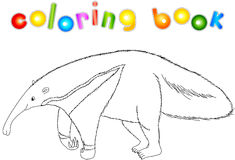 Funny cartoon ant-eater. Coloring book for kids Stock Images