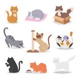 Funny cartoon cats characters different breeds illustration. Kitty young pet Stock Photo