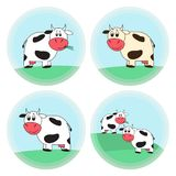 Funny cartoon cow, stickers, tags, logo templates. Four elements of a funny cartoon cow on a round colored background Stock Image