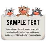 Funny Cartoon Cows with Blank Paper Sign Stock Image