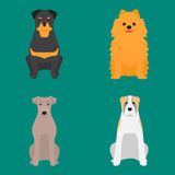 Funny cartoon dog character bread cartoon puppy friendly adorable canine vector illustration. vector illustration