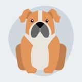 Funny cartoon dog character bread illustration in cartoon style happy puppy and bulldog isolated friendly mammal. Vector illustration. Domestic element flat stock illustration