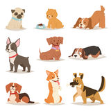 Funny cartoon dogs characters different breads illustration. In cartoon style. Funny happy puppy isolated friendly mammal. Domestic element group flat comic Stock Images