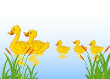Funny cartoon duck family Stock Photos