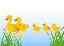 Funny cartoon duck family Stock Photos