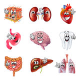 Funny cartoon human organs icons vector set Royalty Free Stock Photos