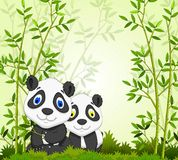 Funny cartoon panda with bamboo forest background Stock Photography