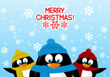 Funny cartoon penguins Stock Image