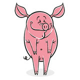 Funny cartoon pig. Royalty Free Stock Photography