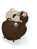 Funny cartoon pug couple Stock Image