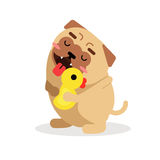 Funny cartoon pug dog character hugging yellow duck vector Illustration Royalty Free Stock Photo
