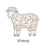Funny cartoon sheep, children illustration. Simple children illustration - cute animal vector drawing, isolated on white stock illustration