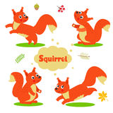 Funny Cartoon Squirrel Characters Set. Welcome Baby. Stock Image