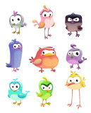 Funny cartoon standing birds set Stock Images