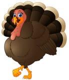 Funny cartoon turkey Stock Photos