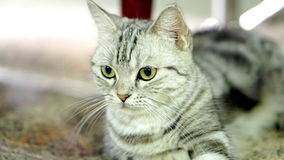 Funny Cat Stock Photos