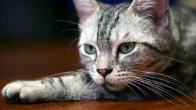 Funny Cat Stock Image