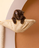 Funny cat in a basket Royalty Free Stock Photos
