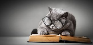 Funny cat in big glasses reading book royalty free stock images