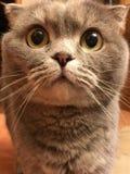 Funny cat with big orange eyes Stock Photo
