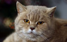 Funny  cat with  bokeh for background Royalty Free Stock Photo