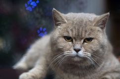 Funny  cat with  bokeh for background Stock Photo