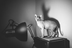 Funny cat Stock Photography