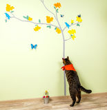 Funny cat catches butterflies painted on the wall Stock Photography